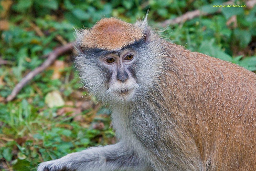 Affen Und Menschen